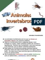 invertebrados-091122132008-phpapp01