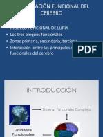 ORGANIZACIÓN FUNCIONAL DEL CEREBRO.ppt