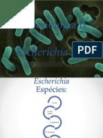Bacteriologia II Slide E.coli