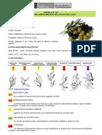 09 olivo