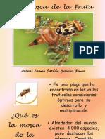 lamoscadelafrutadaippgr-110120133239-phpapp01