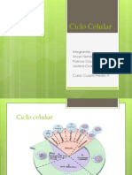 Ciclo Celular2