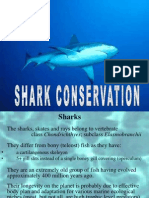 SHARK CONSERVATION.ppt