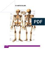 Articulaciones y Huesos