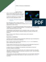 Estilo de Vida Altera DNA e Influencia Metabolismo