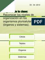 Organización del cuerpo humano 1