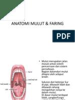 Lab Act Anatomi - Mulut & Faring