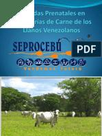 Perdidas Prenatales en Ganaderías de los Llanos Vzlanos.II