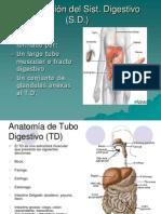 Anatomía Sist. Digestivo.