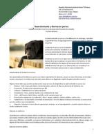 Gastroenteritis en Perros Diarrea en Perros