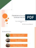 Animais - Primeiros Socorros Em Animais Silvestres