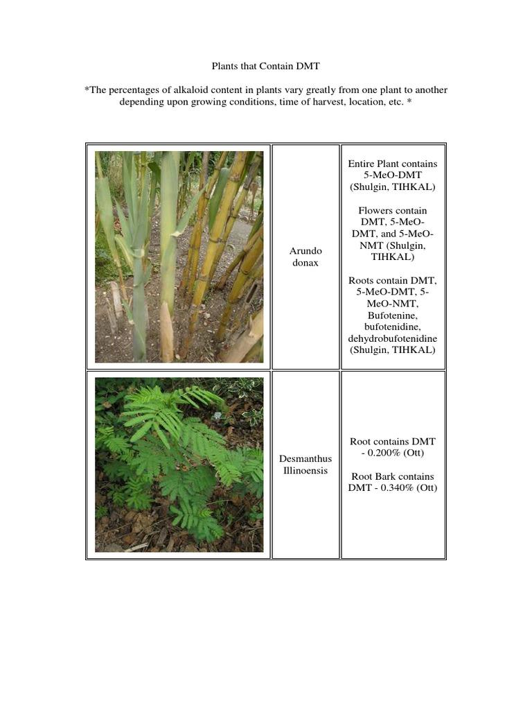 Plants That Contain DMT | Trees | Plants