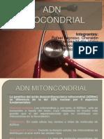 Adn Mitocondrial (1)