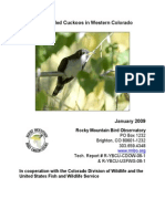 Yellow Billed Cuckoo Colorado information
