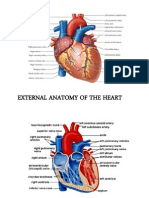 Anatomy of the Heart Review
