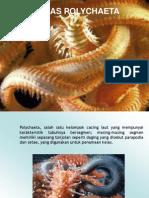 2-Polychaeta.ppt