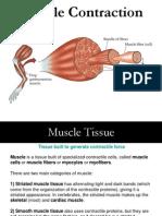 contractia musculara.ppt