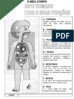 Corpo Orgaos e Sistemas Fichas de Estudo