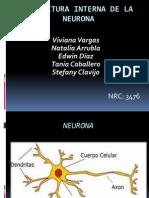 Estructura Interna de La Neurona