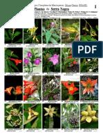 Plantas Da Serra Negra-S.P.