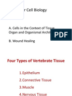 Tissue Types and Wound Healing
