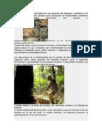 Medio Ambiente Info