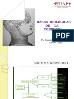 basesbiolgicasdelaconducta-130606161022-phpapp01
