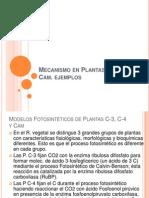 Mecanismo en Plantas C-3, C-4 y Cam