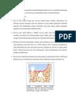 patogenesis ameloblastoma