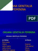 10b-reproduksi-wanita