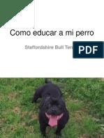 Como Educar a Mi Perro