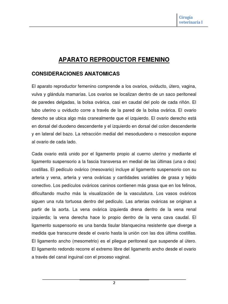 Contemporáneo Anatomía Genital Canina Adorno - Imágenes de Anatomía ...
