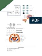 Propedeutica Neurologica Completo