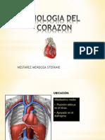 anatomiayfisiologiadelcoraznok-121211094813-phpapp01