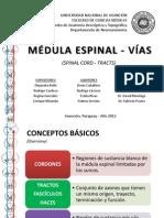 Medula Espinal- Vias
