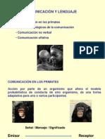 COMUNICACION_Primates.ppt