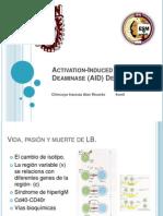 Activation-Induced Cytidine Deaminase (AID) Deficiency