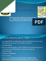 sistematica magnoliidae