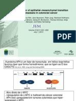 AP4 fator de transcrição envolvido na transição epitélio-mesequimal