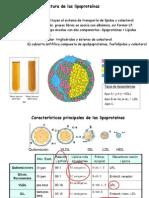 Tema 11 Lipoproteinas