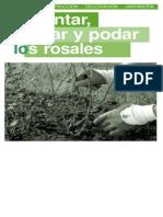 (Agro) Plantar, Cuidar Y Podar Rosales