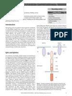Ephrins.pdf