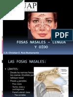 Fosas nasales – lengua          y oído - copia