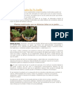 Plantas Medicinales En Tu Jardín