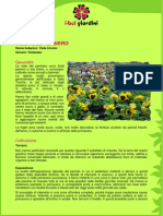 ViolaDelPensiero.pdf