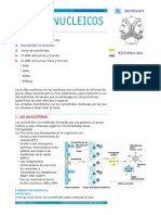ÁCIDOS NUCLEICOS apuntes.pdf