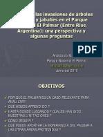 Manejo de las invasiones de árboles exóticos y jabalies en el Parque Nacional El Palmar