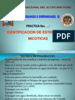 Pract. # 7 Identificacion Estruct Hongos