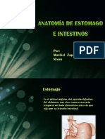 anatomiadeestomagoeintestinos-110303131601-phpapp01