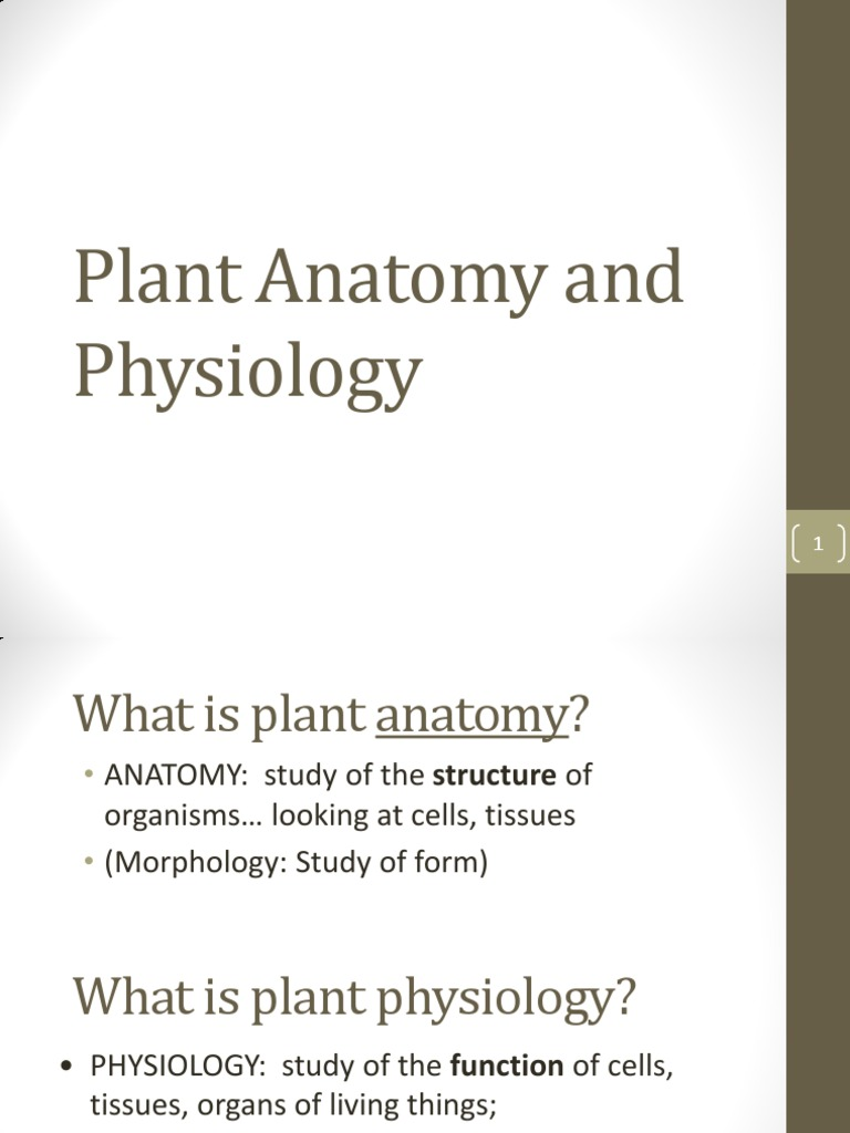 Plant Anatomy and Physiology | Plant Stem | Root